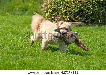 Small dog playing with a stuffed toy