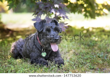 Small dog resting in the shade outside in the yard