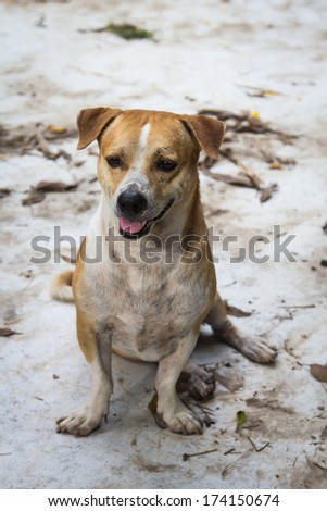 Small dog sat on the dirty area. - stock photo
