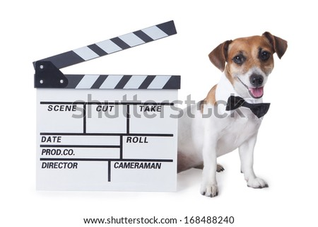 Small dog with a black bow tie and collared shirt smiles sits beside to a movie Clapperboard. White background. studio shot - stock photo
