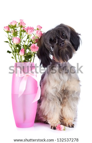 Small doggie. Decorative thoroughbred dog. Puppy of the Petersburg orchid. Shaggy doggie. Doggie and roses. Doggie and flowers. - stock photo