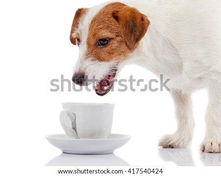 Small doggie of breed a Jack Russell Terrier and white cup on a white background. - stock photo