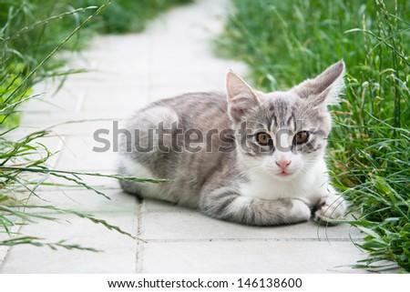 Small domestic kitten - stock photo