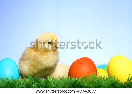 Small easter chick, on blue background - stock photo