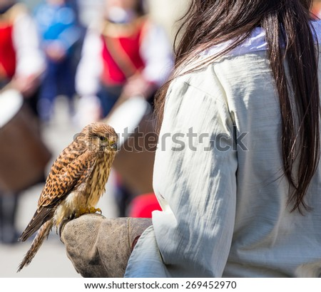 small falcon trained, resting on the falconer's glove - stock photo