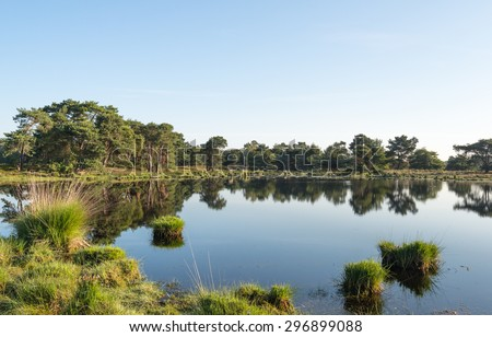 Small fen on a sunny and windless day in the beginning of the summer season. This fen is situated in a large nature area with moorland and woods on the border area of Belgium en the Netherlands. - stock photo