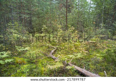 Small field with fallen tree in north forest