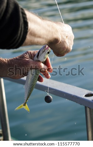Small fish bait for fishing. - stock photo
