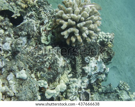 Small fish hiding in the coral - stock photo