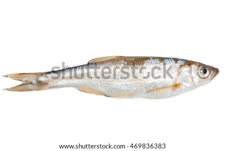small fish on a white background
