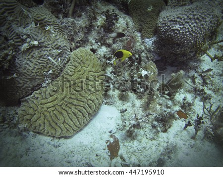 Small fish swimming in a coral reef - stock photo