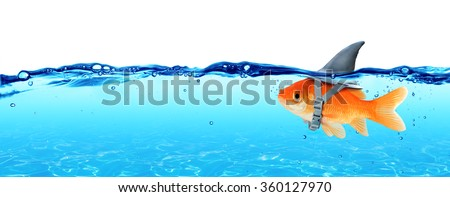 Small Fish With Ambitions Of A Big Shark - Business Concept  - stock photo