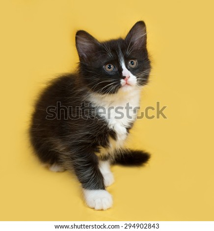 Small fluffy black and white kitten sitting on yellow background
