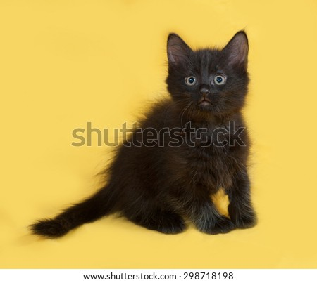 Small fluffy black kitten sitting on yellow background