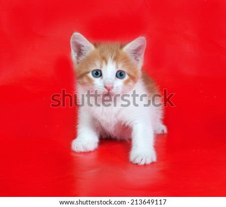 Small fluffy ginger and white kitten sitting on red background