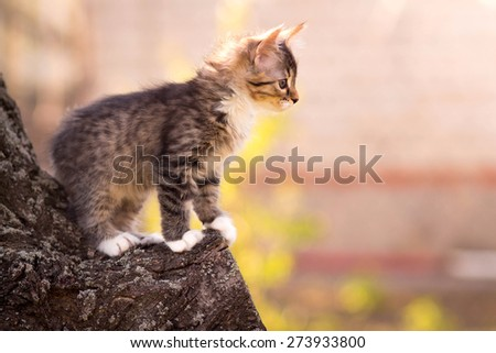 small fluffy kitten sitting in a tree - stock photo