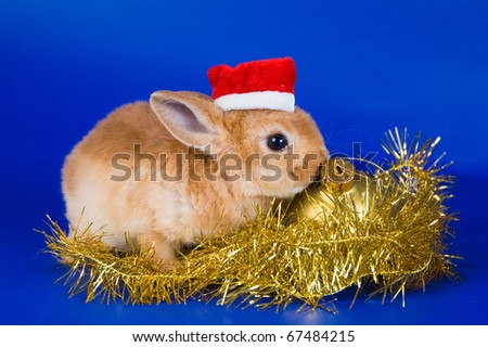 Small fluffy rabbit on a dark blue background