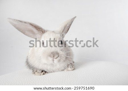 Small fluffy rabbit white - stock photo
