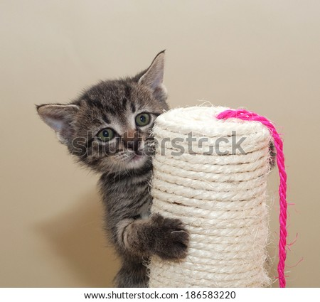 Small fluffy tabby kitten on column on yellow background - stock photo