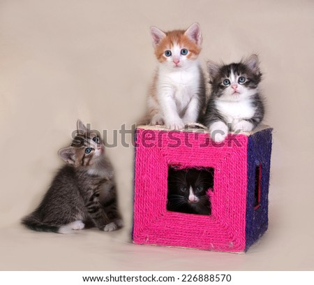 Small fluffy tabby kittens sitting on gray background - stock photo