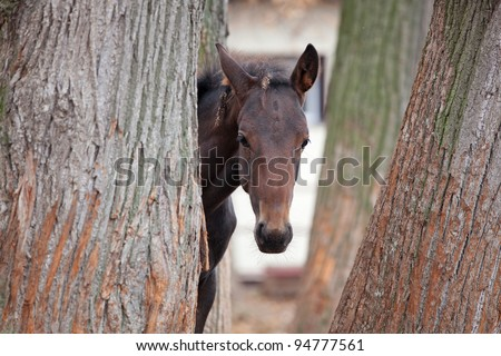 Small foal hiding in the trees on the street - stock photo