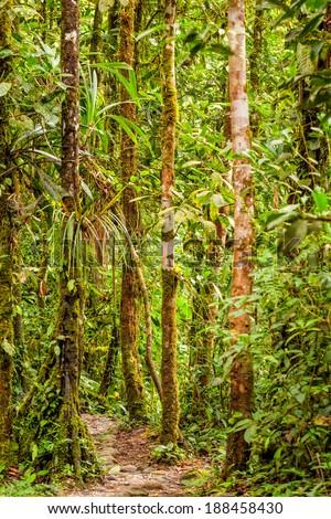 Small Footpath In The Ecuadorian Jungle,  National Park Yasuni - stock photo