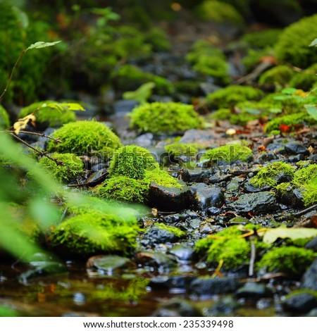 Small forest river. A spring close-up - stock photo