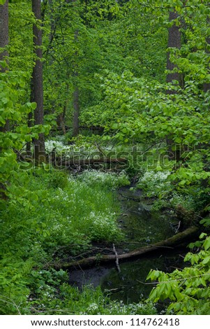 Small forest river crossing alder forest in springtime - stock photo