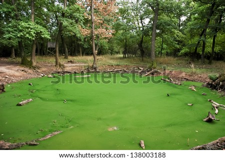 Small forest water algae pond in the shady late summer forest under the trees - stock photo