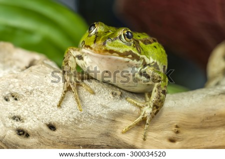 Small Frog - stock photo