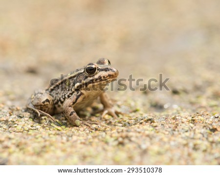 Small frog in dry pond