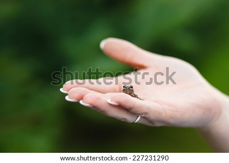 Small frog on a hand. - stock photo