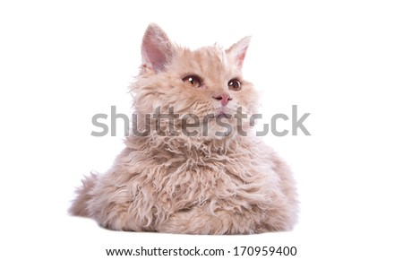 Small funny cat on a white background - stock photo