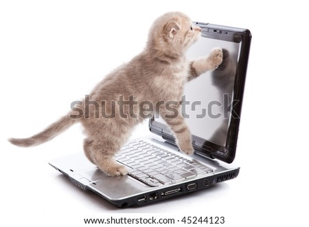 Small funny Kitten on laptop. Isolated on white background