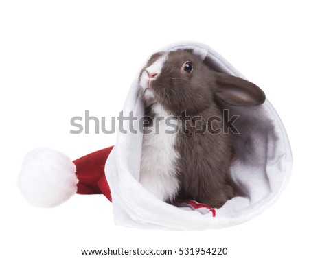 Small funny rabbit in Christmas hat of Santa Claus. Isolated on white background