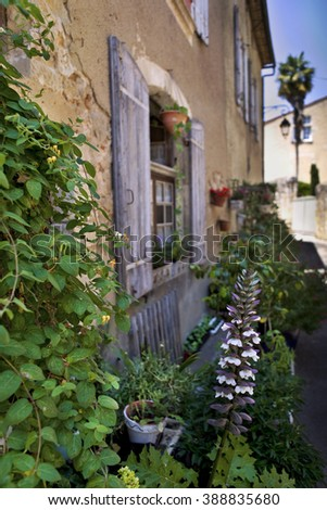 Small garden and plants on the terrace of an old French house