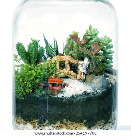 small garden of terrarium bottle on white background. - stock photo