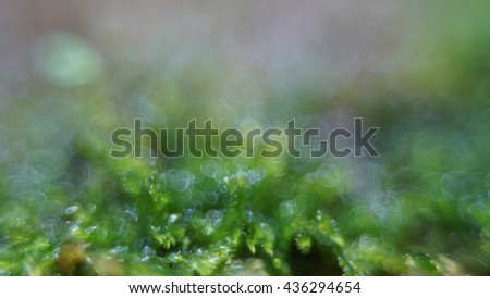 Small garden of terrarium,Soft focus