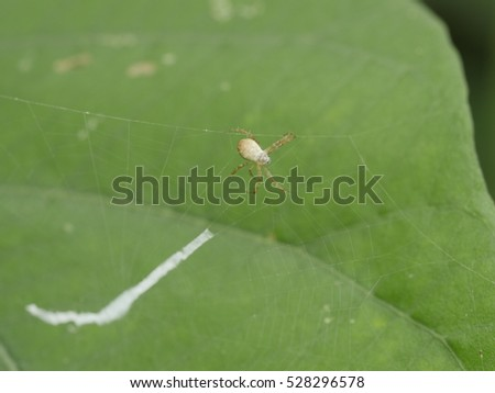 small garden spider crawling on its web