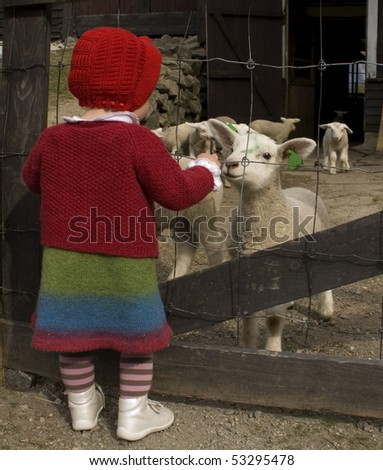 Small girl in woolen clothes looking at the lambs. - stock photo