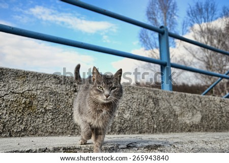 Small gray brown cat on the sidewalk on the road, lonely cute little kitten playing in the street - stock photo