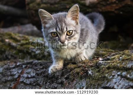 Small gray cat on wood - stock photo