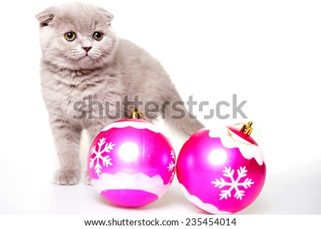 small gray kitten and christmas balls. On a white background. Christmas card - stock photo