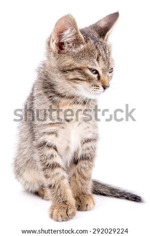 Small gray kitten blinked isolated on white background - stock photo