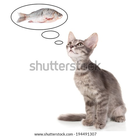 Small gray kitten dreaming of fish, isolated on white