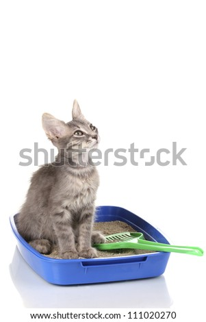 Small gray kitten in blue plastic litter cat isolated on white - stock photo