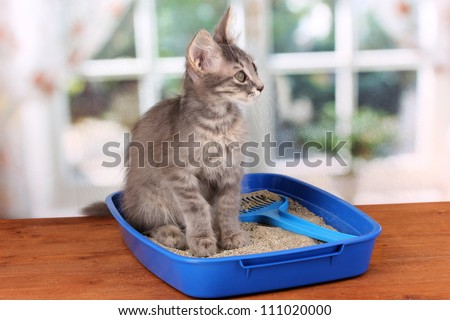 Small gray kitten in blue plastic litter cat on wooden table on window background - stock photo