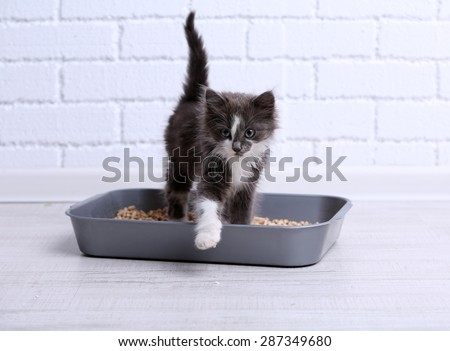 Small gray kitten in plastic litter cat on floor - stock photo