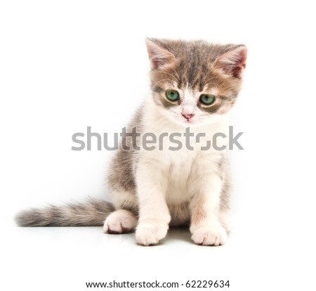 Small gray kitten isolated on a white background - stock photo