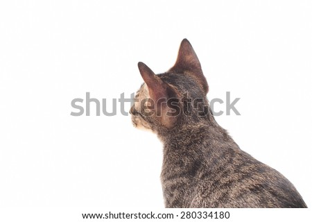 Small gray kitten isolated on white background - stock photo